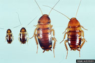 RP Lee Termite & Pest Control - The Bryan-College Station Pest ...