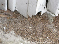 Rp Lee Termite Amp Pest Control The Bryan College Station